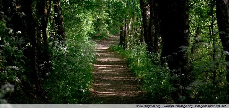 Con đường thiền hành