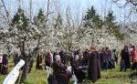Bản hòa tấu mùa xuân.4