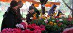 Chợ hoa - 2