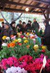Chợ hoa - 6