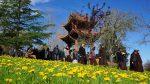 Đi giữa rừng hoa