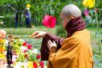 Lễ Phật Đản.14