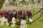 Vào hội hoa mai