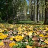 xóm Hạ mùa thu