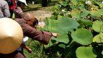 Em nhìn  kìa, có một chú ếch dưới hồ sen