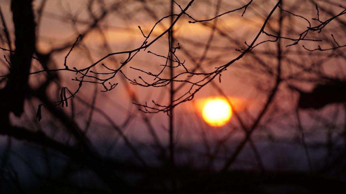 Mặt trời hồng