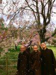 Thưởng thức hoa đào Nhật Bản (hoa Anh Đào)
